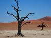 Petrified Trees Sossusvlei, Namibia