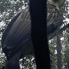 Philippine Eagle Davao