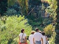 Pinya de Rosa Tropical Botanical Garden