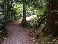Pioneer Trail 196