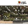 Plaza De America Square Seville