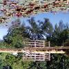 Ponda Pond