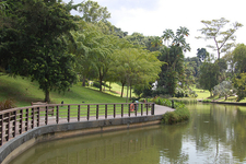 Pond At Singapore Botanic Gardens