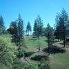 Ponderosa Pines On Summit Of Pine Ridge
