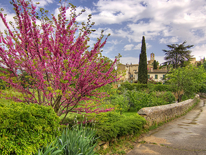 Private Provence Tour: Luberon Villages and Lavender Day Trip from Avignon Photos