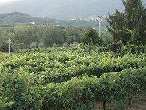 Prosecco Wine Tour Photos
