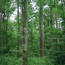 Przylesie Reserve