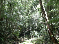 Paluma Range National Park
