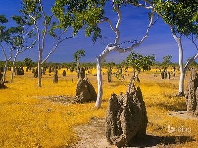 Queensland Termite Mounds AS