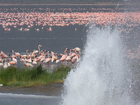 Lake Bogoria National Reserve