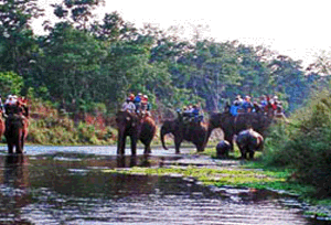 Rajaji Jungle Safaris And Elephant Rides