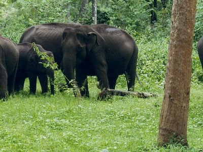 Rajiv Gandhi National Park Safaris