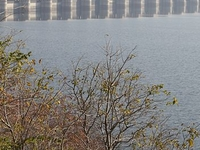 Rana Pratap Sagar Dam