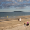 Rangitoto From Milford Beach NZ