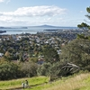 Rangitoto From Mt. Hobson - Auckland NZ