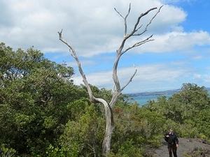 Rangitoto Island Scenic Reserve