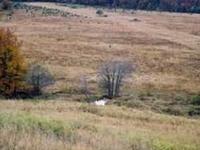 Źródła Jasiołki Nature Reserve