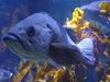 Recreating The Ocean - Aquarium Of The Pacific