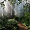 Redwood National State Park CA