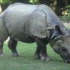 Rhinoceros The Zoo