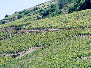 Rhone Valley Wine Tour from Avignon Photos