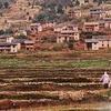 Rice Cultivation - Madagascar
