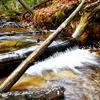 Rifle River