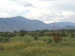 Rincon Mountains