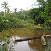 River At Siberut Island