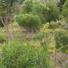 Rodrigues Grande Montagne Indigenous Afforestation