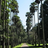 Royal Botanical Garden - Peradeniya