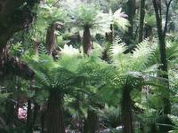 Ruapani Forest