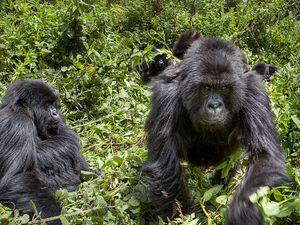 8 Days Rwanda Safari Holiday Tour Photos