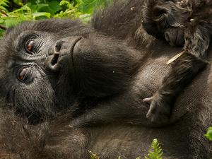 5 Days Rwanda Gorillas and Lake Kivu Tour Photos