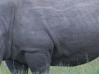 Kigio Wildlife Conservancy