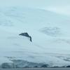 Fuerza Aérea Glacier