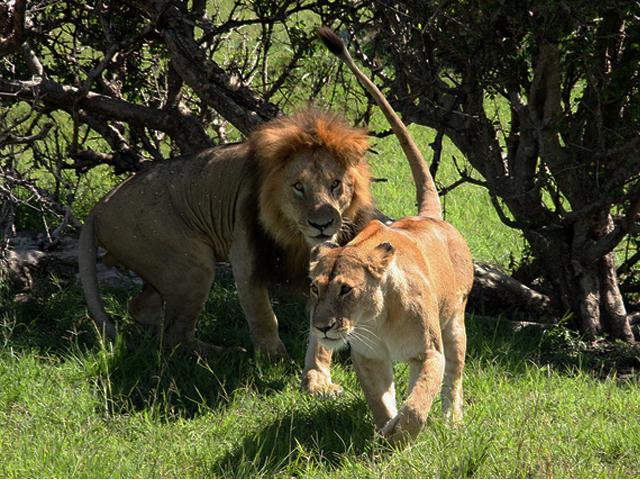Lake Manyara, Serengeti and Ngorongoro Crater Photos
