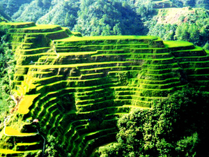 Banaue Sagada Public Tour 2 Days Photos