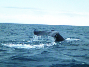 Whale Watching Route Photos