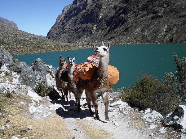 Hiking with Llamas, Santa Cruz / Vaqueria Photos