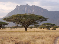 Sweetwaters, Samburu, Lake Nakuru & Masai Mara