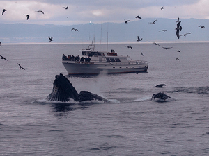 Whale Watching & Wildlife Eco Tour from San Francisco Photos