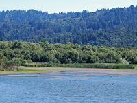 San Francisquito Creek