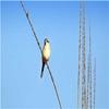 Sardarpur Wildlife Sanctuary