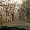 Sathyamangalam Forest