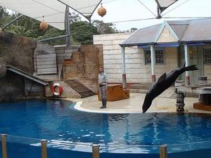 Sydney Taronga Zoo General Entry Ticket Photos
