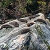 Seals @ Fiordland - Southland NZ
