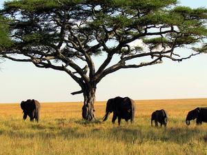 Tanzania Northern Circuit Safaris Photos