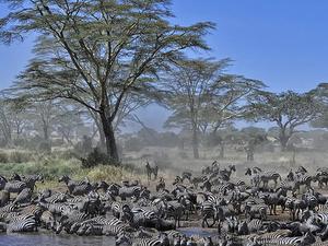 Serengeti Wildebeest Migration Trail Photos