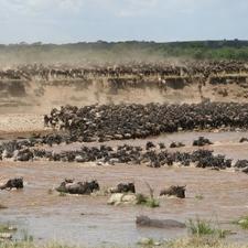 Serengeti2